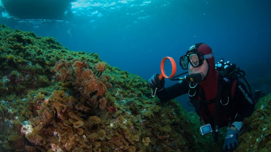 Unterwasserfotografie El Hierro