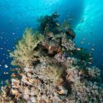 Korallenblock und Tauchboot / Satayeh Riff (Süd)