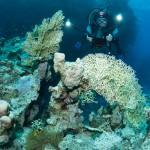 Taucher filmt Anemonenfisch / St. Johns Caves