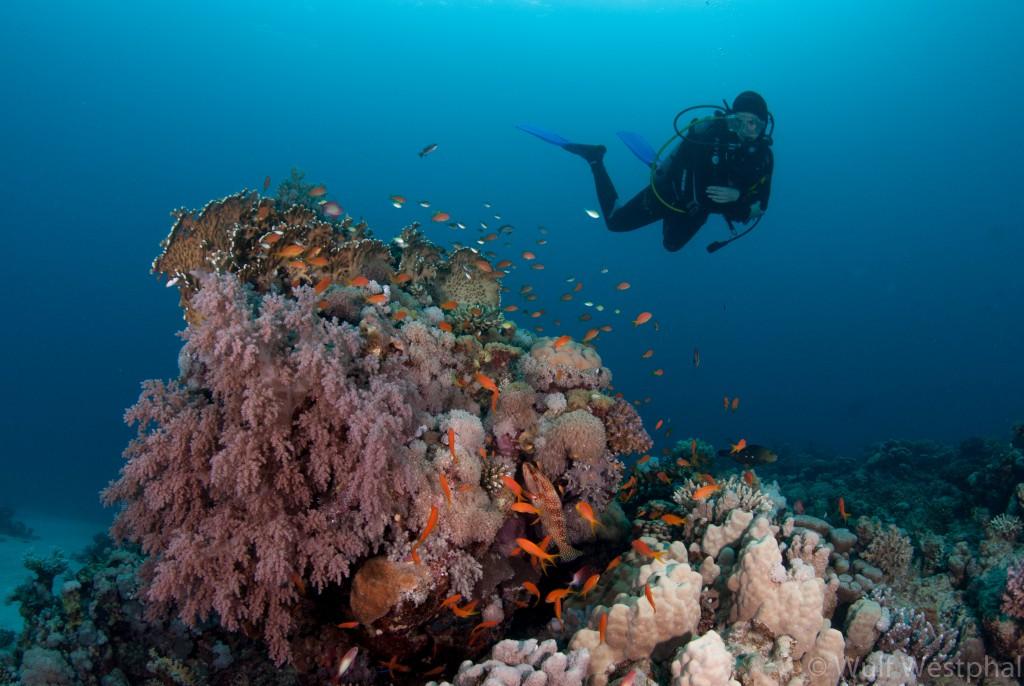 marsa_shagra_aegypten_korallenblock