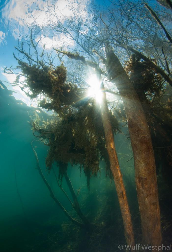 Kreidesee Hemmoor - Wald im Sonnenlicht