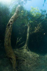 Kreidesee Hemmoor - Bäume unter Wasser