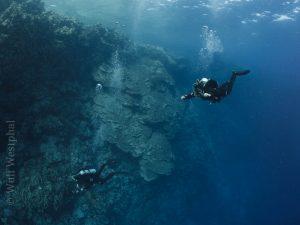 Steilwand Daedalus Riff