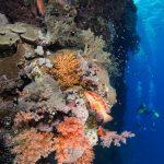 Weichkorallen - Elphinstone
